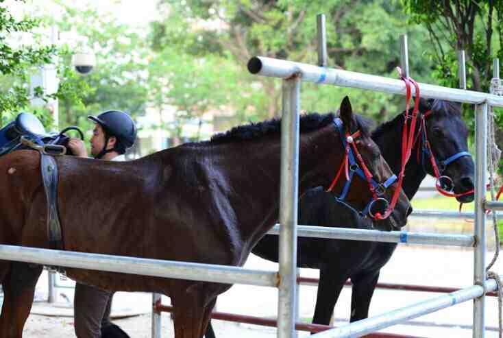骑马初体验活动